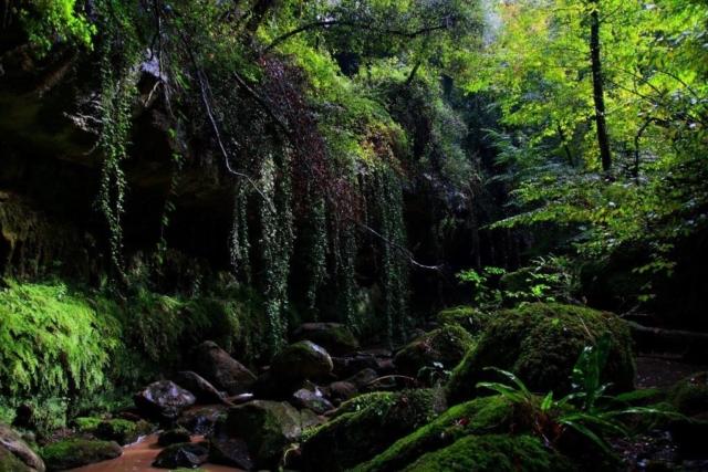 L'acqua di tre fontanili, Sorgente La Fica, Sorgente Carissima e Fontana Nuova si congiungono in una cascata e incontrano la quarta Sorgente che scende giù da un costone roccioso che forma una galleria vegetale quasi fiabesca.
